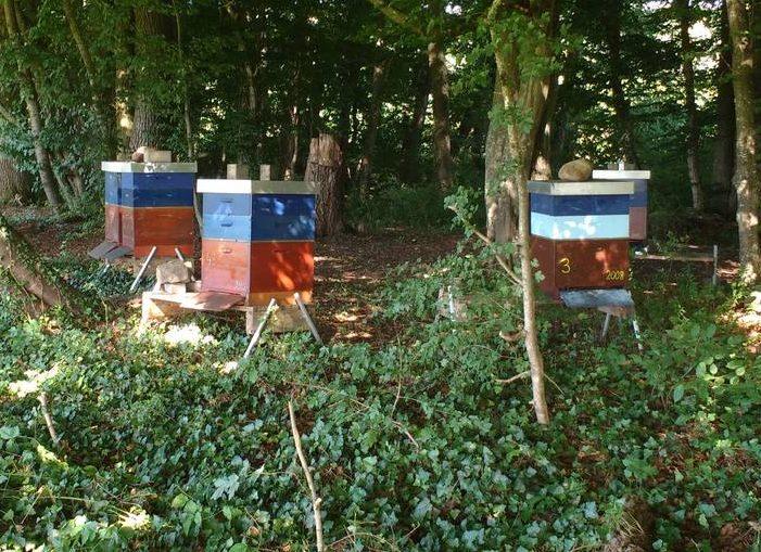 Farbige Beuten bei den Vorbereitungen zum Bienentransport in neuen Dadant-Beuten